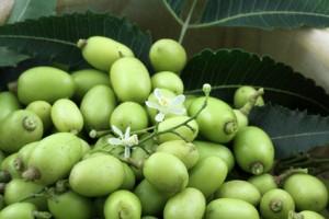 neem, lilas des Indes : bol de fruits verts